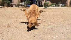 Meet Rexi: SoCal family refuses to put down happy dog with deformed legs