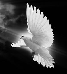 Photo of Dove for fans of Doves 40231495 Religious Tattoos, Religious Art, Dove Drawing, Heaven Tattoos, Dove Tattoo Design, Dove Pictures, Dove Tattoos, Pictures Of Jesus Christ, Birds In The Sky