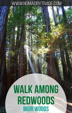 Experience the magnificence of redwood trees just minutes from San Francisco, California in Muir Woods National Monument. #California | #SanFrancisco | #NationalMonument |  #MuirWoods
