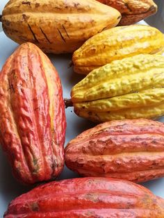 Cacao Venezolano Hershey Chocolate, Chocolate Shop, Exotic Fruit, Tropical Fruits, Cash Crop, Fruit Picture, Albinism, Fruits And Vegetables, Cocoa