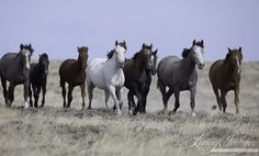 Wild Horses: Wyoming's Governor Seeks Complete Annihilation of His State's Wild Horses
