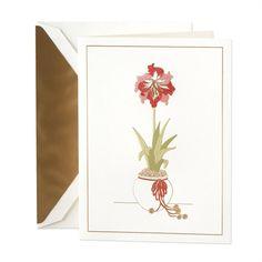 Hand Engraved Amaryllis Holiday Cards