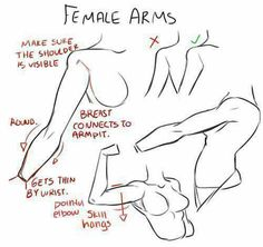 Anatomy Drawing Tutorial Anatomy drawing of arms by on DeviantArt - Body Drawing, Anatomy Drawing, Figure Drawing, Arm Drawing, Female Drawing, Human Anatomy, Drawing Hands, How To Draw Anatomy, Drawing Muscles