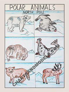 Buy Polar Animals-North Pole Charts Online In Delhi Buy Polar Animals-North Pole Charts Online for schools as well as students regarding their project.