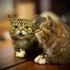DOUBLE BUB: Because two BUB's are better than one.