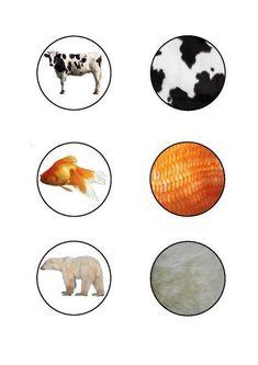 cheznounoucricri - Page 98 Montessori Materials, Montessori Activities, Preschool Worksheets, Book Activities, Animal Activities For Kids, Infant Activities, Nature Animals, Zoo Animals, Happy Diwali Wallpapers