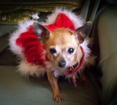 Jasmine...One of Rosie's beautiful little FB pals passed away Monday night (January 14, 2013). She was an abuse survivor who went on to become a humane education partner. What a beautiful little soul the world has lost. Our condolences to DeeAnn!