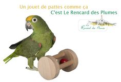 Le Kirendfou Parrot, Budgies, Parrots, Educational Toys, Animaux, Parrot Bird