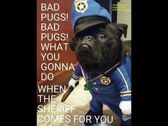BAD pugs BAD PUGS WHAT you gonna do when the SHERIFF COMES FOR you. come check this awesome video out please subscribe and help us build a rescue for pugs.