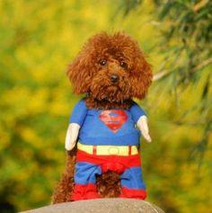 dog costume. superman.