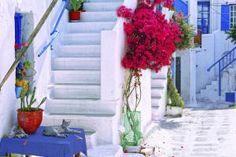 Crea un jardín mediterráneo: Pinta y decora con blanco, azul y colores tierra