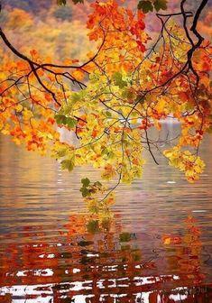Őszi napok, amikor a világ olyan, mintha kristályból készült volna… Minden zeng a fényben. A Balaton part fái csodálatos színekben pompáznak. A tó vize sárgászöld színű, szinte üvegszerű. Egy fuvallat leszakítja a környező nagy hársak és platánok lombját és aranyesővel szórja tele a part menti…