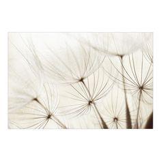 Pusteblume - Vliestapete - Blumentapete Sanfte Gräser Fototapete Breit