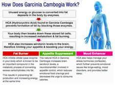 garcinia cambogia how it works in the body