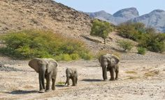 The Great Namibian Journey – Luxury Mobile