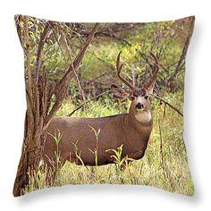 Camouflaged Buck Crystal Creek Colorado II