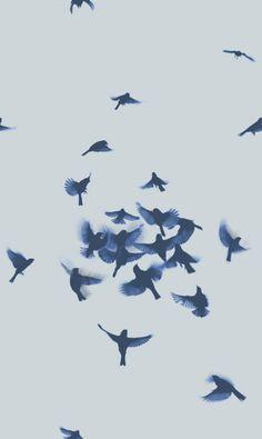 Image via We Heart It https://weheartit.com/entry/137514702/via/5761475 #beauty #birds #forest #grunge #love #nature #summer