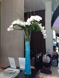 White phalanopsis orchids