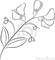 how+to+draw+a+sweet+pea+flower | Sweet pea