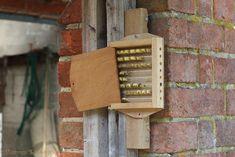 Bee box photo - WP33057