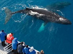 national geographic whales | Journey to Antarctica Photo Gallery -- National Geographic Traveler