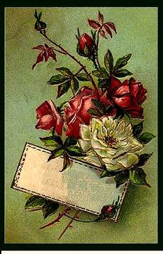All sizes | French Roses | Flickr - Photo Sharing!