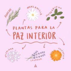 Plantas para la paz interior – MANDALAS PARA EL ALMA Magic Crafts, Herbal Magic, Baby Witch, Magic Book, Little Plants, Green Life, Feng Shui, Herbalism, Spirituality
