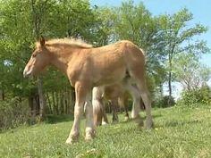 Les animaux de la ferme : le cheval - YouTube