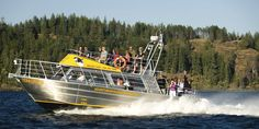 Whale watching Campbell River: Discovery Marine Safaris