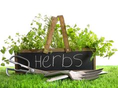 We really love cooking good food, so naturally we love having plenty of fresh herbs on hand! ~Much Love & Grit, H&N Popular Types Of Herb Gardens – Handy Garden Wizard Weight Loss Herbs, Herbal Weight Loss, Growing Herbs, Growing Vegetables, Gardening Vegetables, Types Of Herbs, Adrenal Fatigue, Chronic Fatigue, Fatigue Symptoms