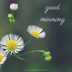 Good Morning. Buenos días