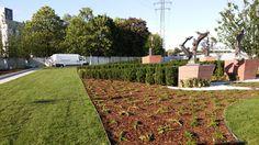 zakładanie ogrodów, zakładanie trawników