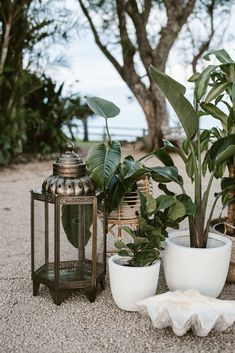 Tropical Luxe Details The Wedding Shed Style & Hire Byron Bay Source by travelwithsheila Dresses Tropical Home Decor, Tropical Interior, Tropical Style, Tropical Vibes, Tropical Houses, Coastal Decor, Tropical Furniture, Tropical Colors, Tropical Wedding Decor