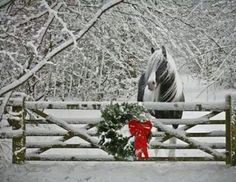 winter horse merry christmas to joyce