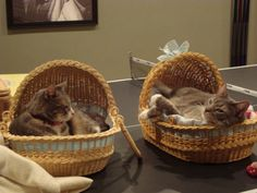 cats in baskets lol