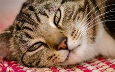 壁紙をダウンロードする 猫, 顔, pensive見