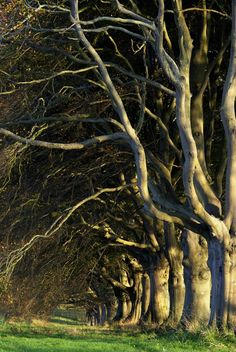 a tangle of branches,Dorset,UK