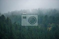 Fotobehang forest, fog, foggy - foggy forest hill ✓ Makkelijke montage ✓ 100% ecologisch afgedrukt ✓ Bekijk de opinies van onze klanten!