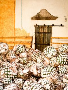 agave pineapples, tequila, mexico