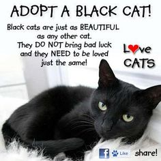"""Do you know what I think? Humans. They are bad luck. I am 100% done with hearing """"cats are evil"""" or even other animals! No animal is evil. All animals have good hearts and we need to stop criticising them because of say the colour of their fur! Black cats! To me, on Friday the 13th, if I cross a black cat, I am the luckiest person on this earth- probably the universe. Animals can kill for survival and maybe once a cat or a dog may attack but that doesn't mean suddenly they're all bad! Humans…"""