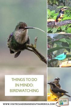 Things to do in Mindo: Birdwatching - Visit Ecuador and South America Stuff To Do, Things To Do, How To Memorize Things, Ecuador, South America, Latin America, Spanish Speaking Countries, Close Encounters, Galapagos Islands
