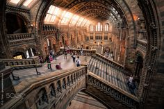 Darwin and Friends Natural History Museum, London Museums, Darwin, Stairs, Facebook, Friends, Ladders, Amigos, Stairway