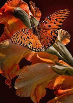 Orange butterfly perched on orange flowers. Papillon Butterfly, Butterfly Kisses, Butterfly Flowers, Orange Butterfly, Flying Flowers, Monarch Butterfly, Butterfly Chrysalis, Butterfly Drawing, Black Flowers