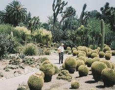i really love cactus