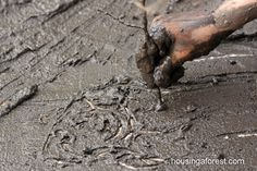 Mud prints. Smear some mud on the sidewalk or on a piece of cardboard and  draw with a stick. FUN!
