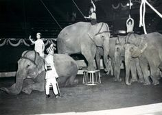 Ringling Brothers Circus, 1949