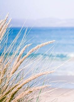Longing for the warm sea breeze and comforting sound of waves breaking the beach.