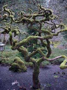 I love soltude trees. The represent strenght to me. Survival.