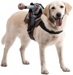 """Great """"Headless Horseman"""" Costume for Your Big Dog!"""