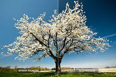 Top 10 Digital Photography Tips: Use a Polarizing Filter